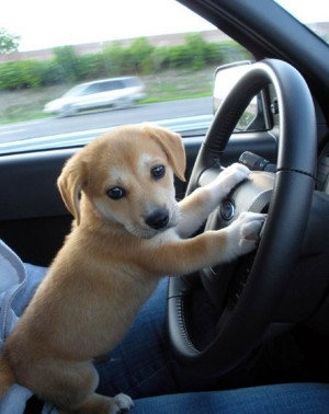 He's never gonna pass the drivers test if he keeps taking his eyes off ...