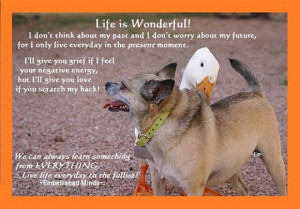 Dog Quotes (37)