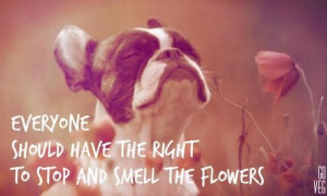 Flowers. French Bulldog Quote About human Rights.Rose, Puppies, French ...
