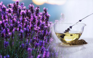 Sleep: Lavender essential oil induces sleep and hence it is often ...
