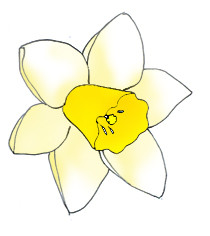 spring clipart daffodil pale