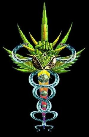 La marihuana parece estar retomando su ancestral carácter medicinal ...
