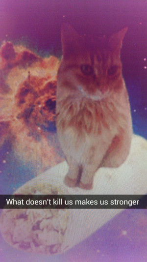Cats in Space with Inspirational Quotes