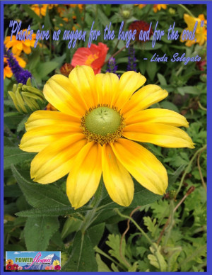 Inspirational Gardening Quotes at Power Flowers