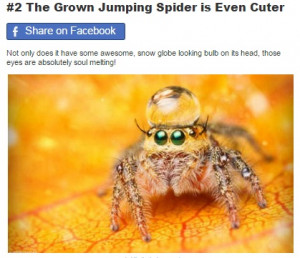 Spiders Who Are Done Being Creepy And Just Want To Be Loved. #4 Is ...