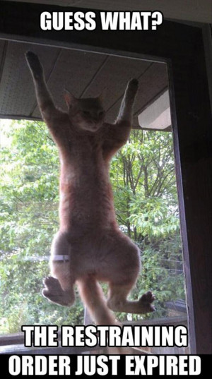 Attack Of The Funny Animals – 40 Pics