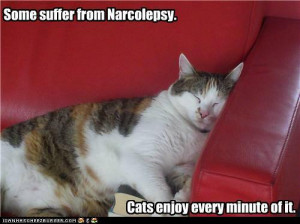 funny pictures - Some suffer from Narcolepsy.