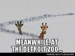 Meanwhile, at the Detroit Zoo.