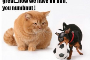 funny cat and chihuahua moment funny cat and chihuahua moment