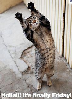 ... funny kitty happy friday animal stuff cat fun friday cat finals friday