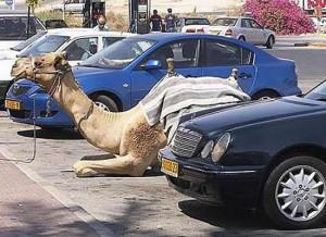 Funny Car Parking