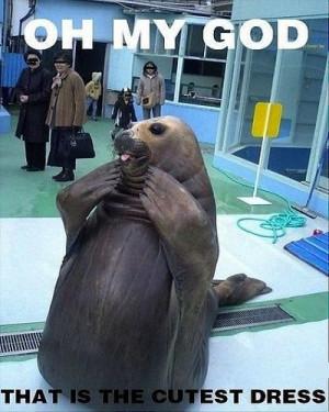 Sea Animal Meme