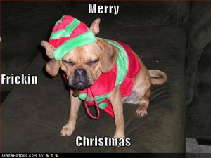 funny-dog-pictures-grumpy-dog-wishes-you-a-merry-christmas.jpg
