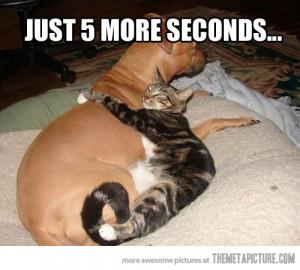 Funny photos funny cat hugging dog sleeping cute