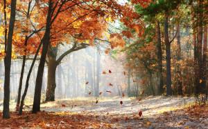 清晨枫叶林中阳光风景桌面壁纸