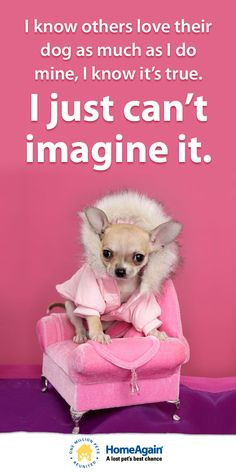 Chihuahua Quotes