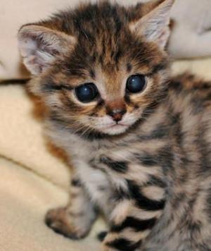 Cute Baby Zoo Animals
