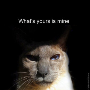 what's -yours-is mine-cat-quote-cute