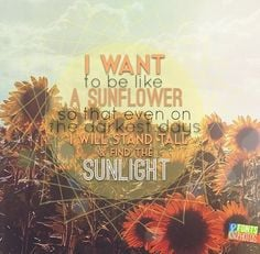 ... darkest of days I will stand tall and find the light. sunflower quote
