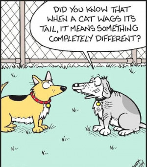 Funny Dog Cat Tail Wag Cartoon Picture