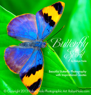 ... Butterfly Photography by Robyn Nola paired with Inspirational Quotes