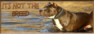 pit-bull-pits-it-is-not-the-breed--facebook-timeline-cover-for-fb.jpg