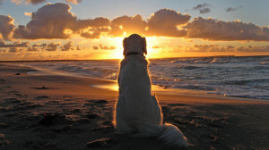Dog on Beach at Sunset HD Wallpaper