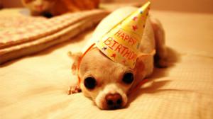 Happy Birthday Funny Images Background HD Wallpaper Happy Birthday ...