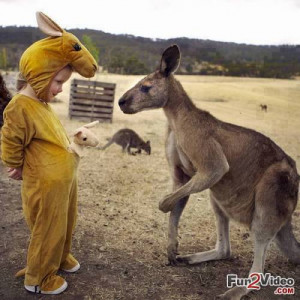 Baby Kangaroo Funny Cute Picture
