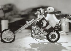 Biker Chicks Rule.