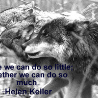 wolf quotes photo: Wolf Avatar Wolves_work_together.png