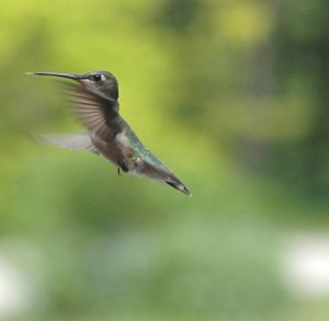 Hummingbird Quotes