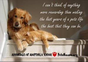 animal, dog, cat, pet, animal, inspiring quotes for animal lovers ...
