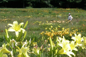 consider-the-lilies-of-the-field-jean-hall.jpg