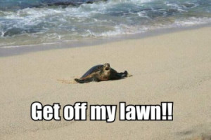 Funny Turtle and Tortoise Pictures
