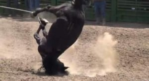 Horse Abuse Documented at Rodeo