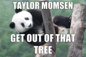 funny, haha, lol, morri, panda, quote, quotes, saying, sayings, taylor ...