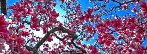 Cherry Blossom Facebook Cover