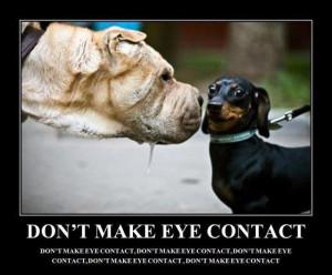 funny dachshund quotes funny dachshund funny dachshund sayings