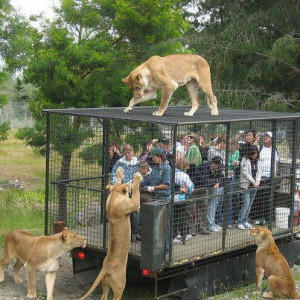 This is the correct way to see the wild animals