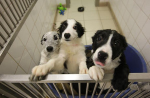 ... Dog Day 2015: Quotes, Cute Pictures To Celebrate Man's Best Friend