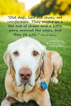 old dogs quotes Old dogs fit well,