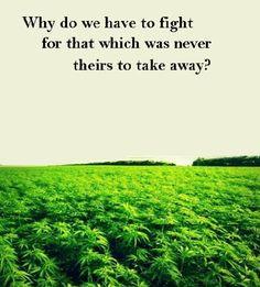 ... Yeah, Cannabis Wisdom, Mary Jane, Legally Cannabis Now, 420 Growing