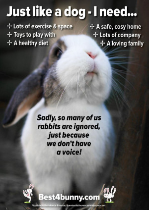 It's so sad that so many people fail to know what rabbits need to live ...