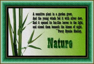 Senstive Plant In A Garden Grew Nature Quote