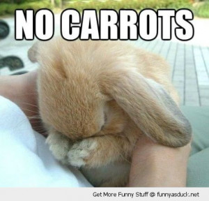 sad cute bunny rabbit animal no carrots funny pics pictures pic ...
