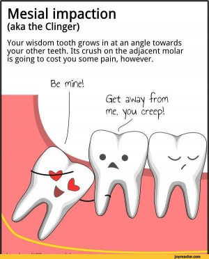 ... wisdom tooth grows in at an angle towards your other teeth. / wisdom