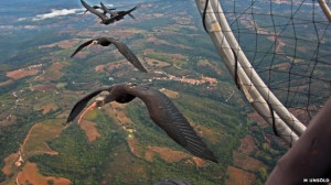 Fly like a bird: The V formation finally explained