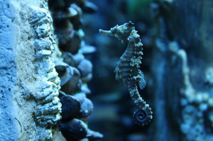 water blue ocean sea pastel rocks sea life seahorse sea creature