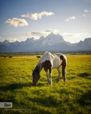 Paint Horse Quotes http://500px.com/photo/1516146